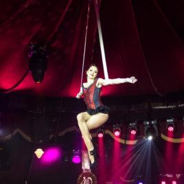 Aerial Straps & Hand Balance Artist