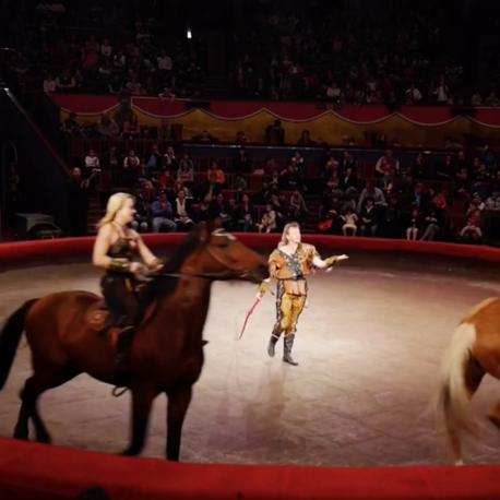 464 horses1