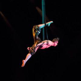 Aerial Lyra / Straps / Silk